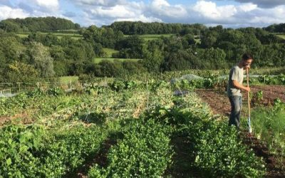 Apply for a small farm lease with the Ecological Land Cooperative