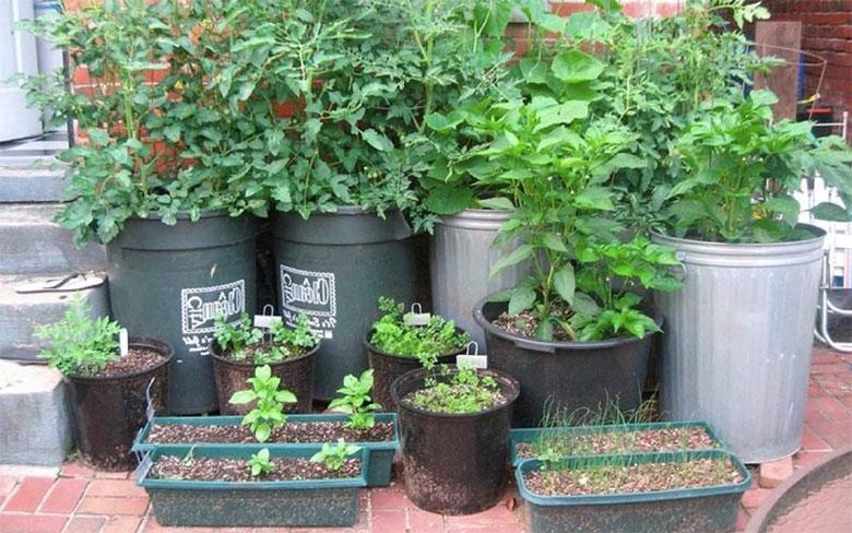 No Garden? No problem.