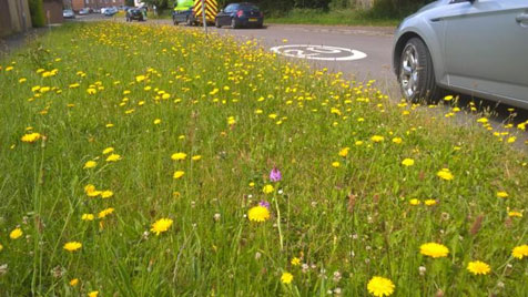 Keeping our verges wild