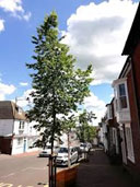 Lewes Tree Summit