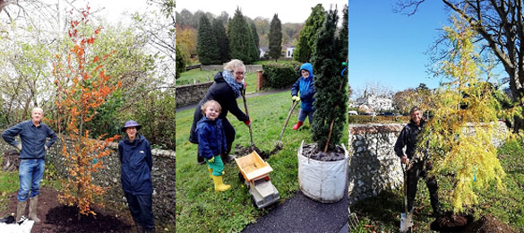 Want to help plant trees? Here are the local community groups to join