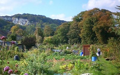 Lewes Town Council agrees nature-friendly allotments policy